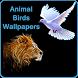 Animal Bird Wallpapers by Wallpaper Infotech