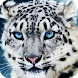 Snow Leopard Live Wallpaper by ChiefWallpapers