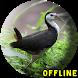 Suara Burung Ruak Ruak Pikat by KingKustur Dev