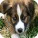 Dog Training Guide by Best Free Apps Mobile