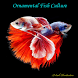 Ornamental Fish Culture by QkukApp