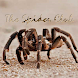 Spider Club Of Southern Africa by Jacaranda Digital Apps