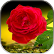 Rose Live Wallpaper by STECHSOLUTIONS