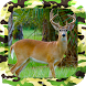 Whitetail Buck Shooter by New and Addictive Top Free Adventure Games