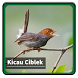 Kicau Suara Burung Ciblek by kangdeveloperstudio