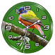 Painted Bunting Clock Live WP by Lo Siento