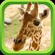 Wild Animal Games & Sounds by Fun Fun Games!