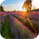 Beautiful Nature Wallpapers by Zexica Apps