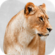 Baby Discover Animals by Hatch Works Ltd