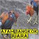 Ayam Bangkok Juara Rahasia Botoh Tua by Padepokan Cirebon-Banten