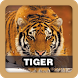 Tiger Sound Effect by Juns Project