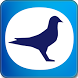 Topigeon Online by Justin TsuiCC