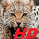 leopard wallpapers HD free special for you by funnylab