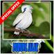 Burung Jalak Terbaru by CaolaDev