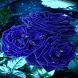 Blue Roses Live Wallpaper by Daksh Apps