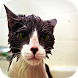 Wet Cats Wallpapers by Laland Apps