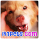 143pets Cute Videos by Fedmich