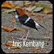 Masteran Kicau Anis Kembang by EdukaPlay