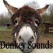 Donkey Sounds by Scorpion King
