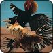 Angry Chicks: Rooster Fight by Game Slot Studio