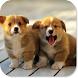 Cute Puppy HD Wallpapers by HD Wallpaper Developers