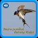 Suara Pemikat Burung Walet NEW by Yayane Apps