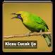 Kicau Suara Burung Cucak Ijo by kangdeveloperstudio