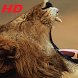 lion wallpapers HD free special for you