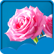 Rose Live Wallpapers by Live Wallpapers Free