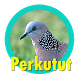 suara burung perkutut by perimusicadev