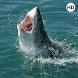 Shark Wallpaper 3D