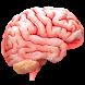 VR Human Brain by Trendyworks LLC