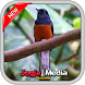 Birds singing master mp3 by JogjaMedia