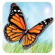 Butterfly Game Kids by Progamer