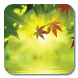 Fallen Leaves Ripple LWP by Orzapp