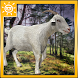 Free Goat Simulator 2016 by SUN GAMES
