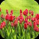 TulipsBG: Free Tulip Wallpaper by ETC Apps
