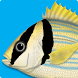 Marine Fishes - ID Guide by Caranx Informatica Ltda
