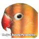 Jual Burung Hias & Kicau Purwokerto - Banyumas