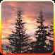 Sunset live wallpaper by iim mobile