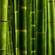 wallpaper bamboo by motion interactive