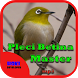 Master Suara Burung Pleci Betina by Hoki Developer
