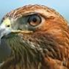 hawk space conquest by genius kids worldwide