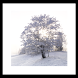 Winter tree Livewallpaper by 권민규