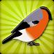Kicau Burung Cendet by Desatya Kedai Media