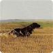 Pedigree Setter Anglais by GPS Plein Air