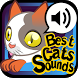Best Cats Sounds by Netigen