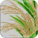 Rice Kannada by Jayalaxmi AgroTech