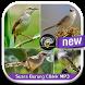 Suara Burung Ciblek MP3 by vinadroid