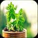 Cura pelas Plantas